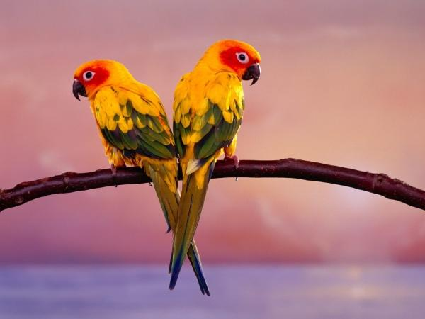 酷我 音乐诗歌吧 鹦鹉的故事