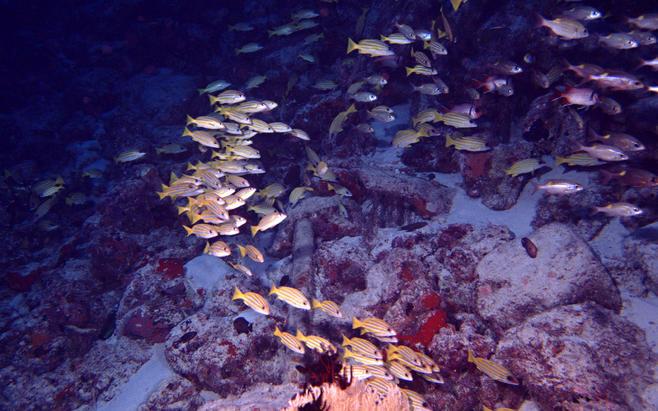 海洋生物之——深海鱼群