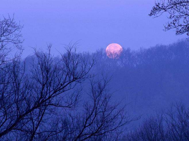 月光下蒲公英唯美图片