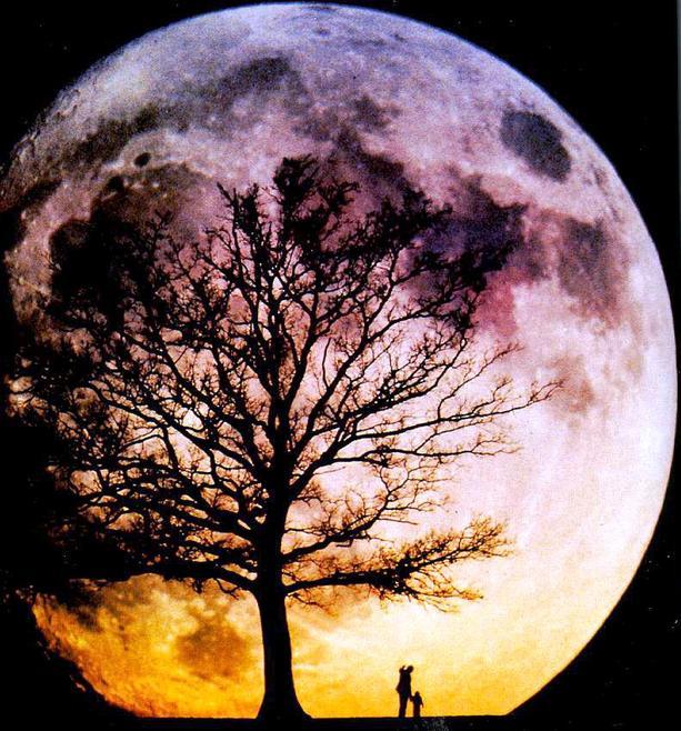 月桂树简笔画1