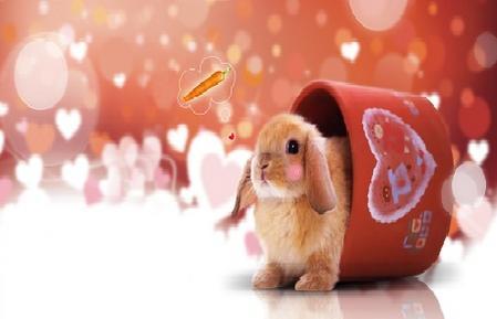 我也要制作皮肤 皮肤说明 可爱的茶杯兔带来有爱的心情~~~ 用户评论